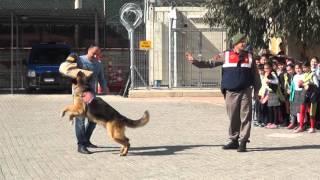 Jandarma Köpeği Tetik