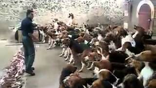 Как кормить собак, пиздец дресура