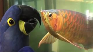 Попугаи. Самые смешные и прикольные попугаи. Прикольные попугаи! Приколы про попугаев! Топ 10