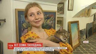 В Одесі хитрий кіт ходить їсти одразу до семи різних господинь