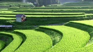 Video SATOYAMA: Japan's Secret Watergarden - BBC Natural World (Wildlife Documentary) download MP3, 3GP, MP4, WEBM, AVI, FLV Juli 2018