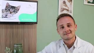 Vídeocase | Remissão de diabetes em gatos | Produzido pela MADÍ Comunicação