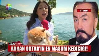 Adnan Oktar'ın  en masum kediciği!