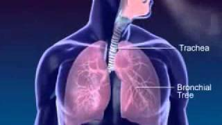 Respiration 3D Medical Animation.wmv