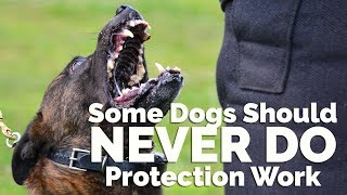 Some Dogs Should Never Be Protection Trained With Michael Ellis