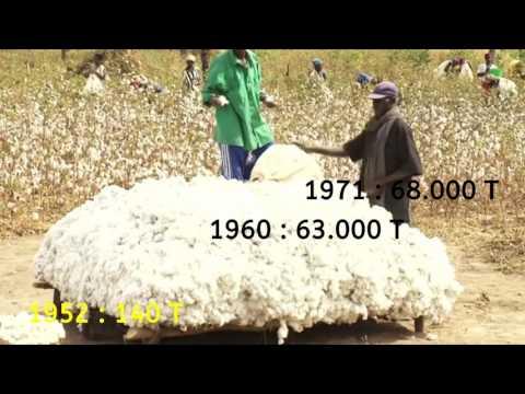 Mali et coton