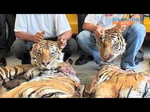 Stamping out the wildlife trade (Wildlife in Singapore Part 4)