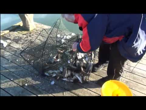 ставим кубарь для ловли рыбы