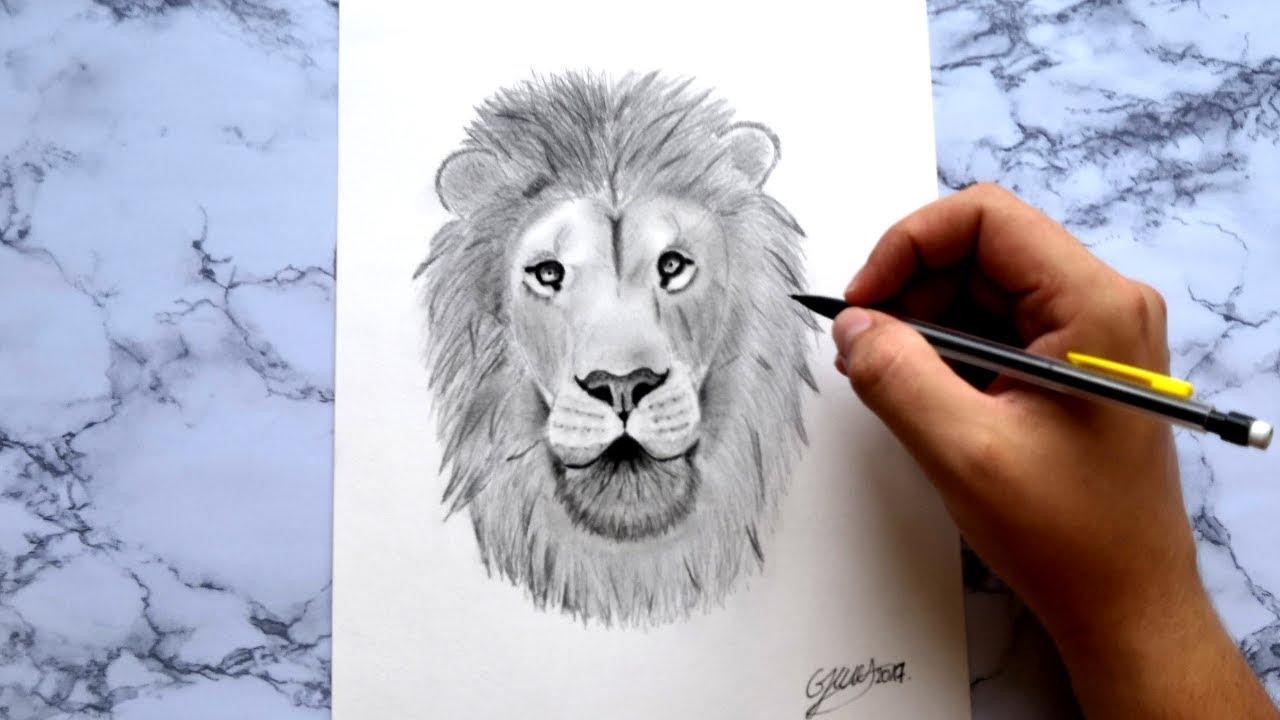 Comment dessiner un lion how to draw a lion youtube - Comment dessiner un lion ...