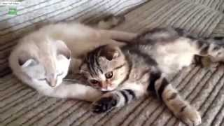 Funny Cats | Cute Cats | Fluffy Cats! - Cats Compilation 2015 (Part 1)