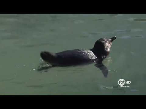 Saiba o que fazer quando encontrar um animal marinho na praia
