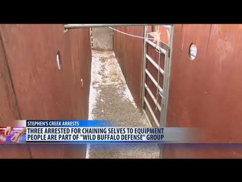Three members of bison advocacy group arrested at Stephen's Creek