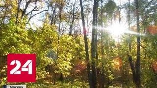 Осень добавила москвичам красок и экстрима
