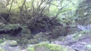 元滝伏流水は近くにある奈曽の白滝よりはメジャーではありませんが、感...
