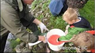 Weaver Creek Salmon