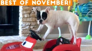 Download Ultimate Animal Reactions & Bloopers ofNovember 2018 | Funny Pet Videos Mp3 and Videos