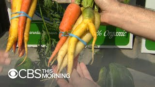 """Is """"ugly produce"""" the key to our food waste problem?"""