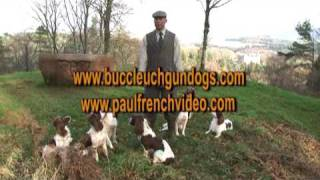 Complete Springer Spaniel Training Series