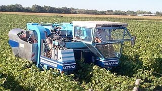 Amazing Grape harvesting machines  in the world. Modern agriculture compilation