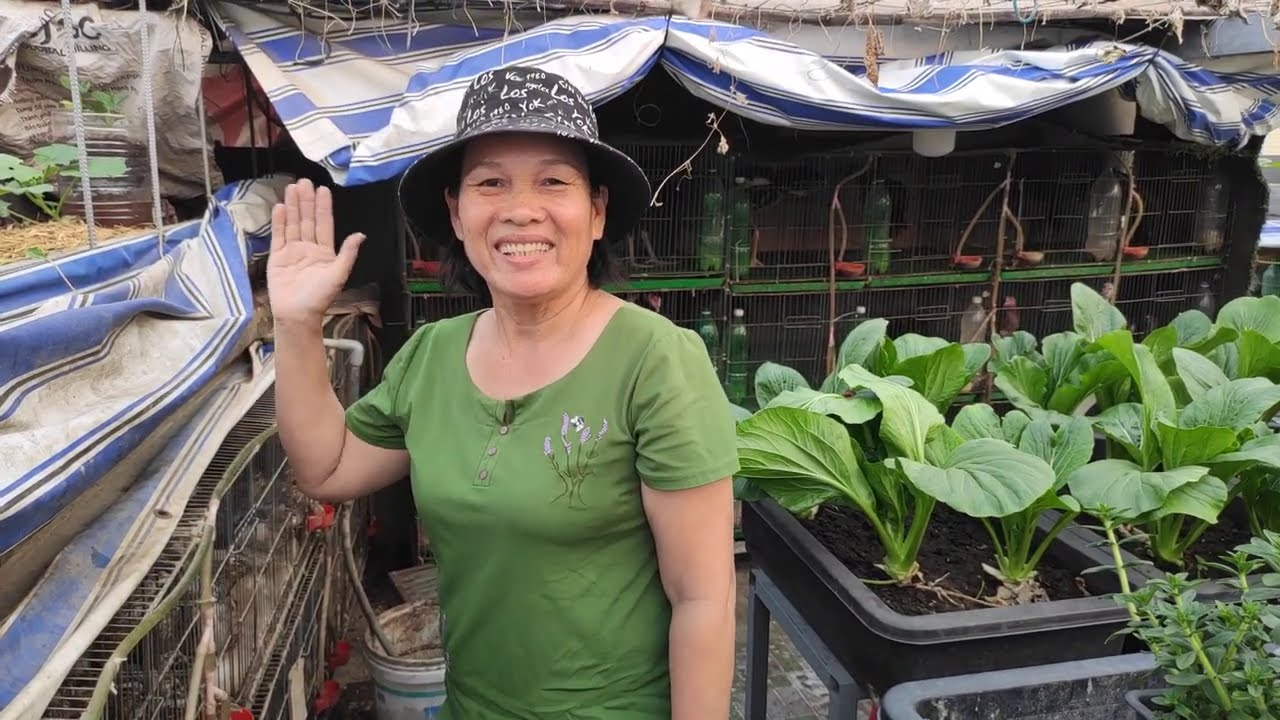 Vườn Rau Sân Thượng xung quanh nuôi những gì  , lấy phân ủ để trồng rau  | Khoa Hien 393