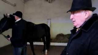 Сходство и различие карачаевской и кабардинской породы лошадей. Клыч-Герий Магометович Урусов.