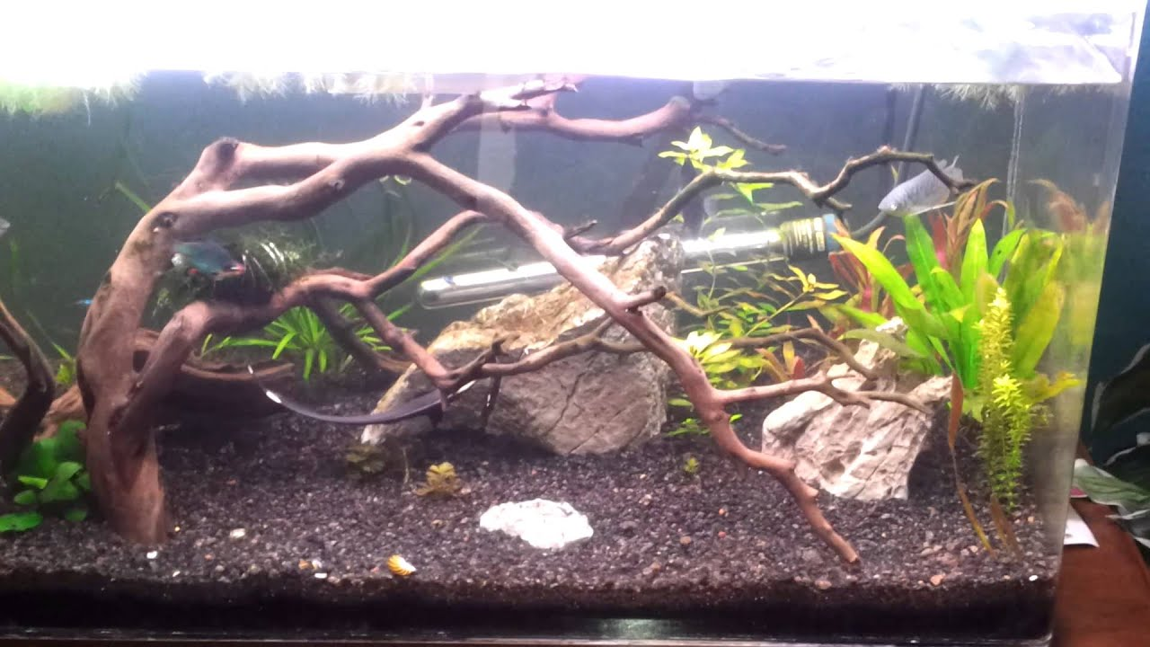 60 gallon planted tank recent halfway there youtube