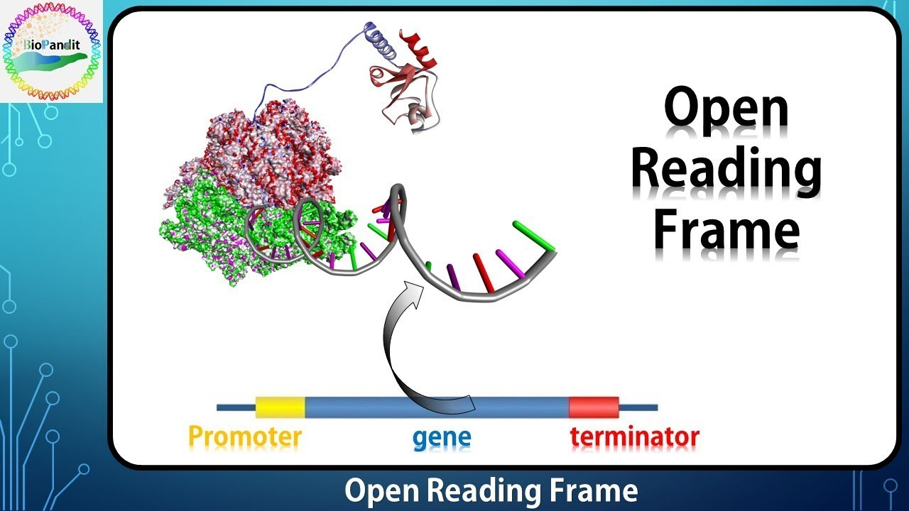Open Reading Frame - YouTube