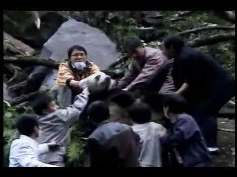 Wolong Earthquake Video from Pandas International