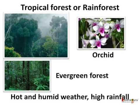Science - What Are Different Forest Habitats And How Animals Adapt To Them- English