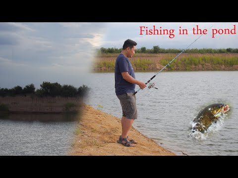 Fishing In The Pond Part_1