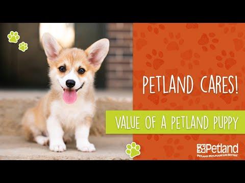 Value Of A Petland Puppy
