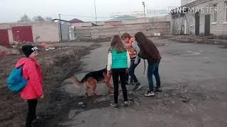 Девочки играют с немецкой овчаркой Брутом.