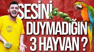 BİL - KAZAN #3 | SEVMEDİĞİN ÜÇ YOUTUBER !! |