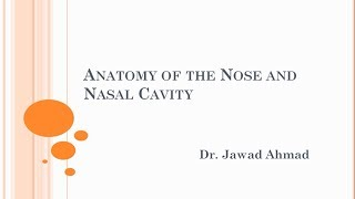 Detailed Anatomy of the Nose and Nasal Cavity 1