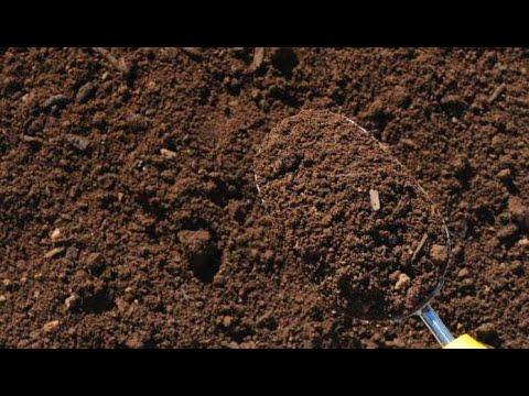 Вопрос: Как узнать влажность грунта на глубине в цветочном горшке?