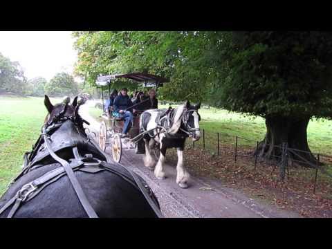Jaunting Car Ride Killarney National Park, Republic of Ireland