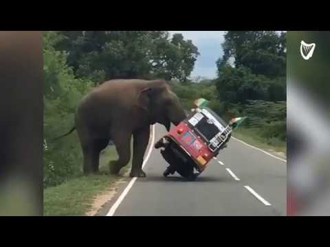 Man Tries To Hand Feed A Wild Elephant AND Gets More Than He Bargained For