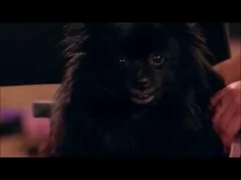 Britain S Got Talent Dog Hypnotist