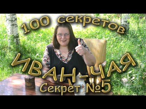 Иван-чай (кипрей узколистный) – полезные свойства, состав