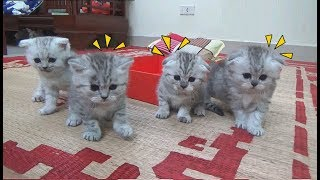 The First Time Kittens Go Outside So Cute | Kittens Funny