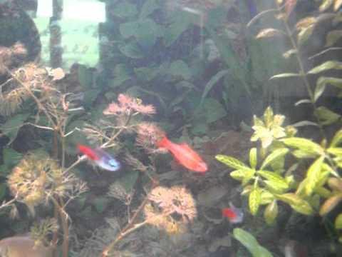 mon premier aquarium d eau douce