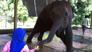 Ank2 jumpa gajah