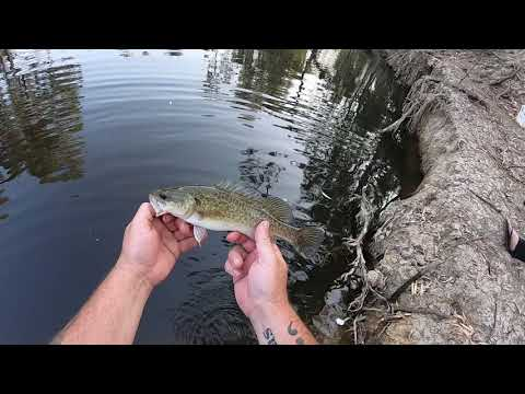 Murray Cod Fishing With The Cheese And Kisses