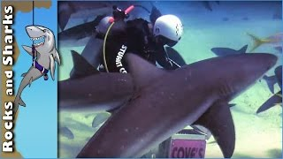 Bahamas Shark Diving Video from 2009 with Stuart Cove. Jump into the water with over 40 sharks waiting for your entry to feed them. Caribbean reef sharks, lion fish and one Gigantic Grouper are caught on film.