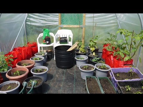 Polytunnel Growing - My First Year