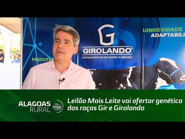 Leilão Mais Leite vai ofertar genética das raças Gir e Girolando