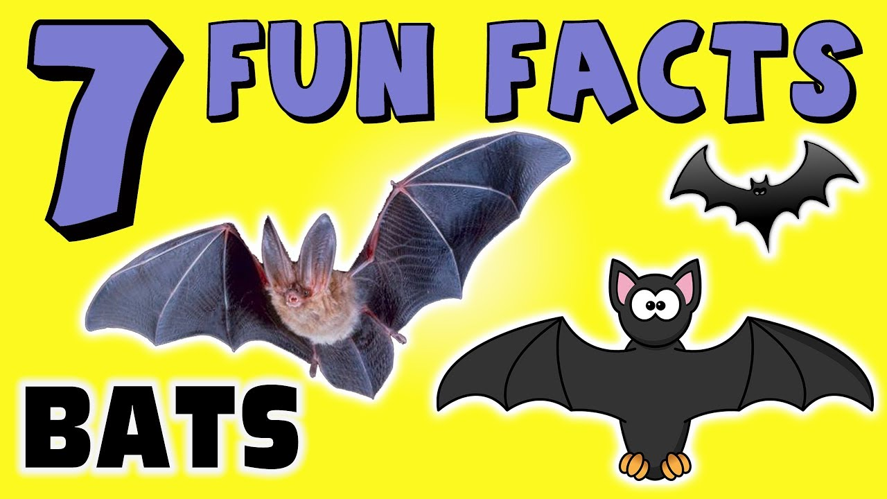 7 Fun Facts About Bats For Kids Learning Vampire Colors Funny Sock Puppet