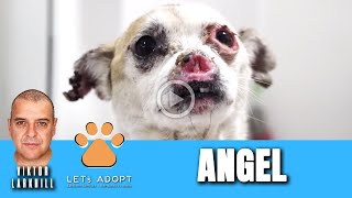 Hope Rescues Sweetest Dog With No Nose Named Angel - @Viktor Larkhill Extreme Rescue