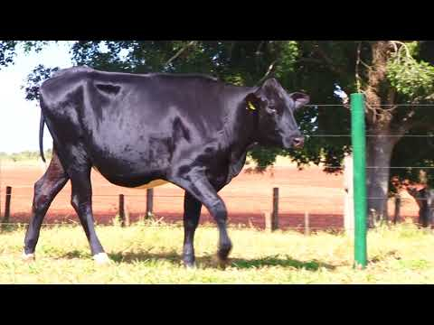 LOTE 28 9906BE