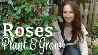 Plant and Grow Roses - Grow a beautiful Garden with Scarlett